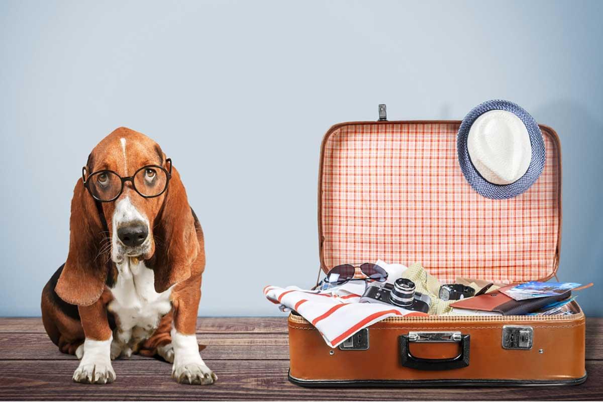 מעבר דירה עם חיות מחמד - הנדימן יכול הכל